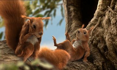 Od marca ub.r. bank prowadzi odnowioną komunikację reklamową nastawioną na poprawę wizerunku marki - bohaterami reklam są sympatyczne animowane wiewiórki.