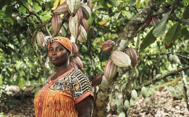 Plantacja kakao. Zdjęcie: materiały prasowe