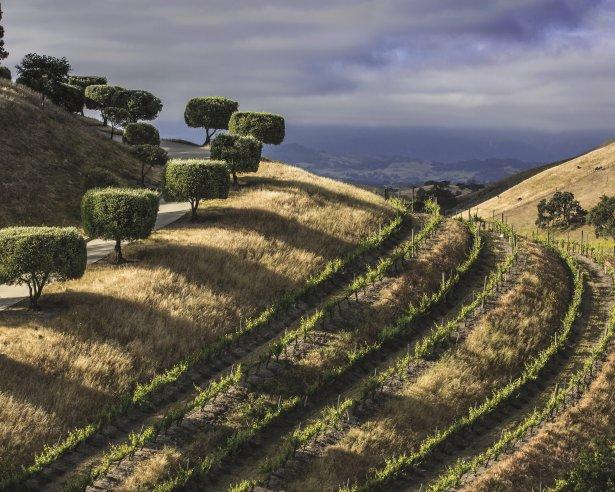 Winnice w słonecznej Kaliforni. Zdjęcie: materiały prasowe