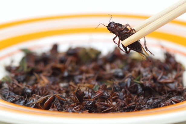 Zdjęcie: Shutterstock.com