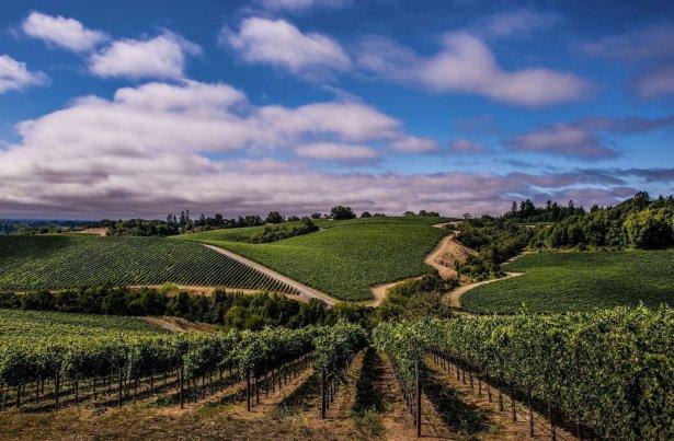 Fot. California Wine Institute